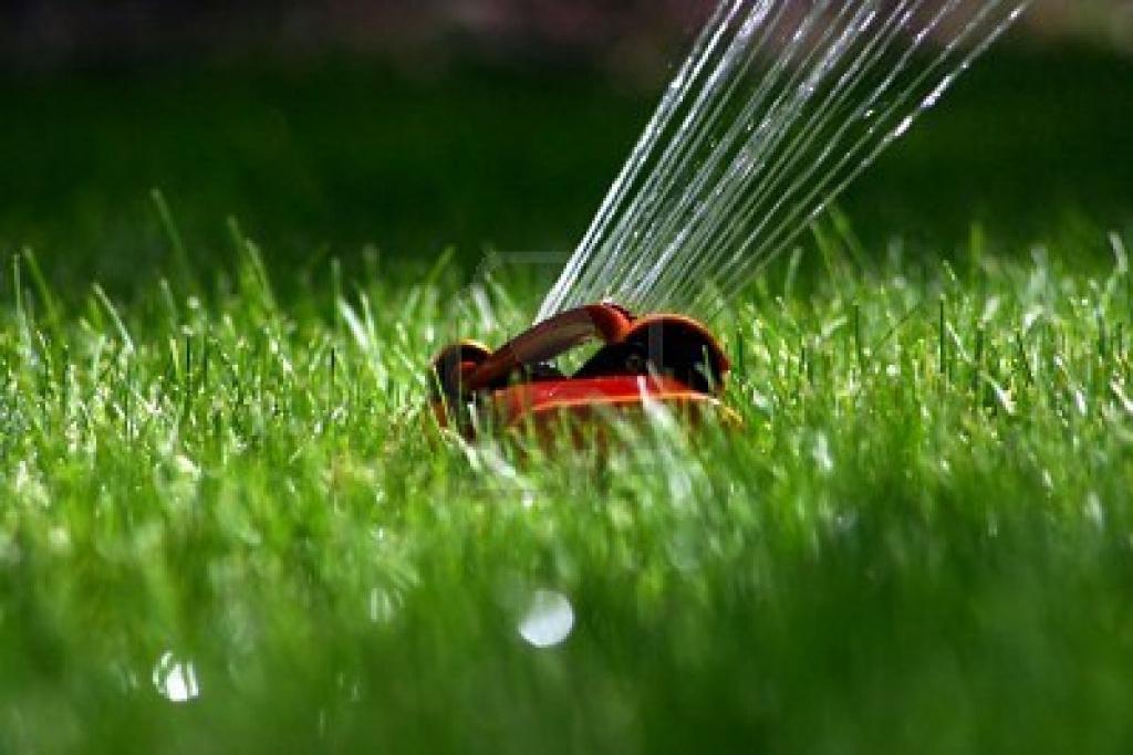 как оформить идеальный газон